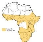 Spotted hyena range.